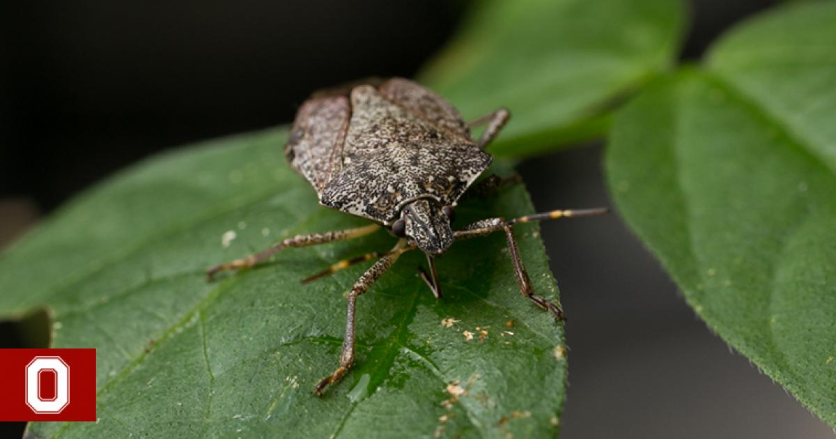 how to get rid of stink bugs sustainability. Black Bedroom Furniture Sets. Home Design Ideas