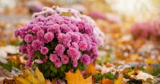 Fall planting tips, The Ohio State University
